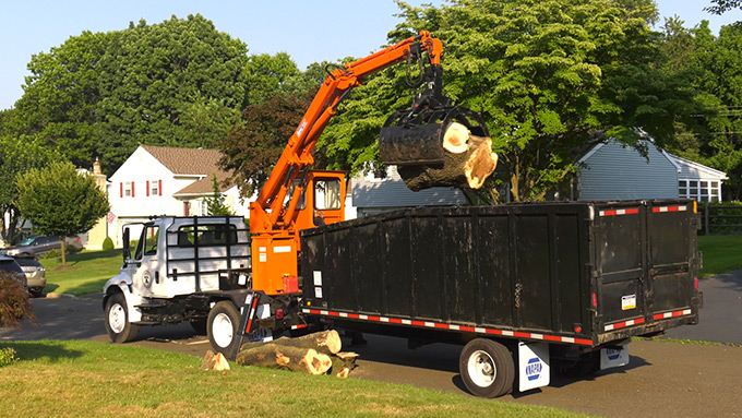 Tree Services: Safety and Insurance is Key!